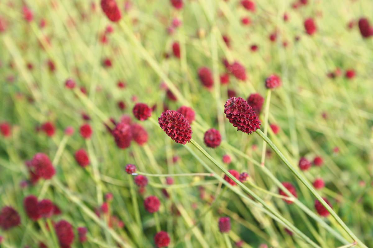 Blumen SOPHI PARK Bad Liebenzell