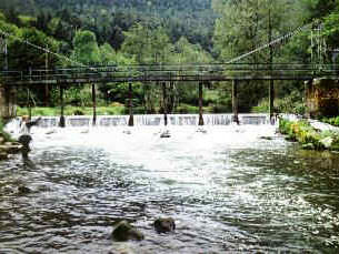 Fliegenfischen Bad Liebenzell