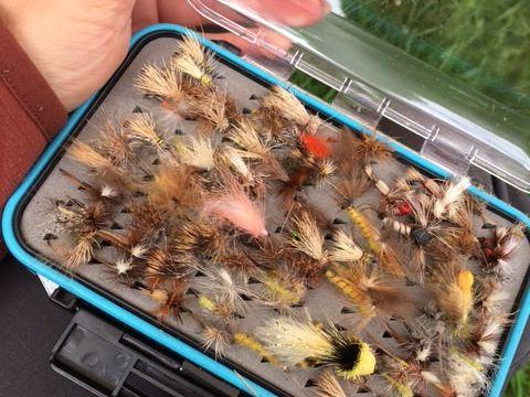 Bad Liebenzell Fliegenfischen
