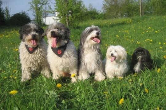 Hunde mit Halstüchern