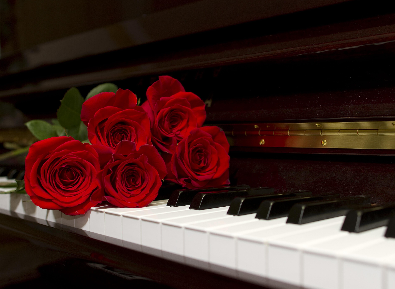 Rosen und Klaviertastatur