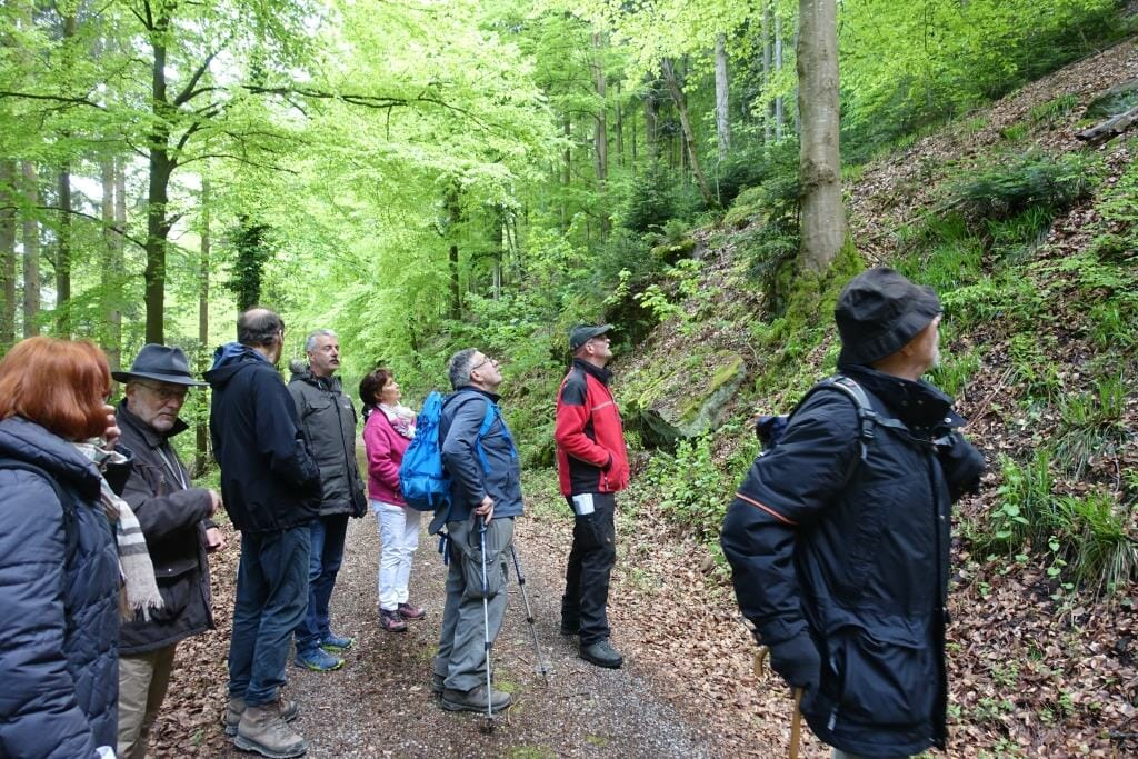 Wandern in Bad Liebenzell im Schwarzwald